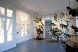"""Dokumentation: Vigdis Hautrø - Solsang """"Solsang"""" (2015) Fargeblyant og blyant på plate, kryssfiner og bjørk. """"Attgrod"""" (2015-18) Gran, aluminiumsfester. Foto: Vigdis Hautrø"""